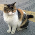 Pick a rescued cat as a pet for your children – Beth explains why.