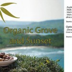 Organic Grove and Sunset event organized by the Gaia Foundation and Green Drinks Malta